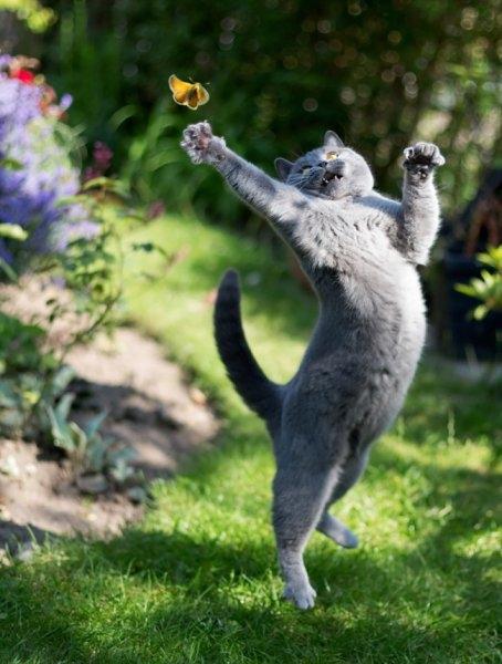 Birbirinden ilginç kedi fotoğrafları 14