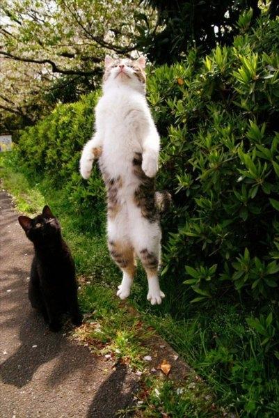 Birbirinden ilginç kedi fotoğrafları 15