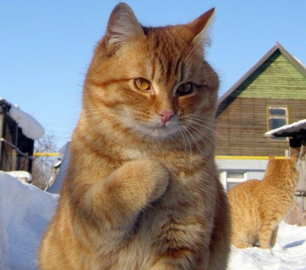 Birbirinden ilginç kedi fotoğrafları 16