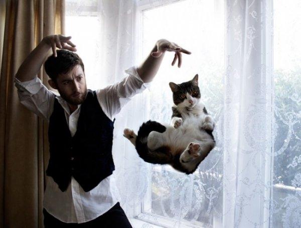 Birbirinden ilginç kedi fotoğrafları 2