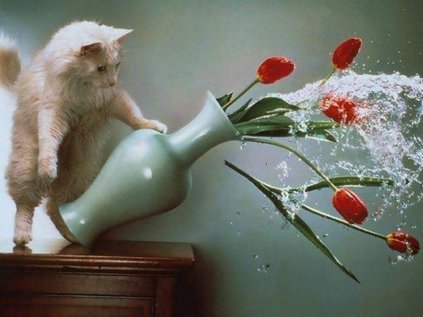 Birbirinden ilginç kedi fotoğrafları 3
