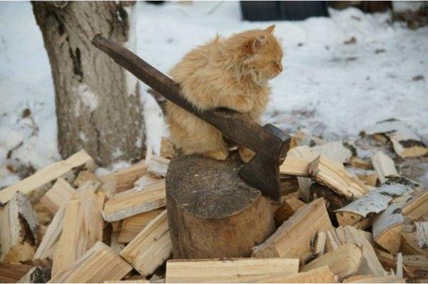 Birbirinden ilginç kedi fotoğrafları 4