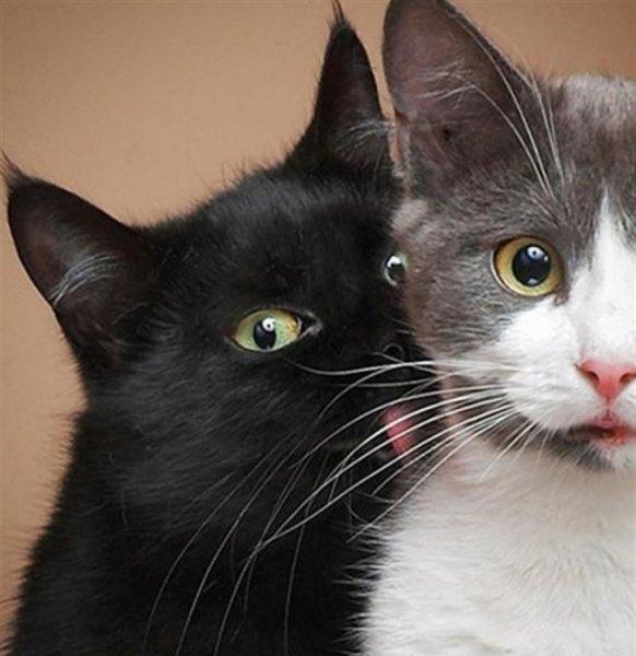 Birbirinden ilginç kedi fotoğrafları 5