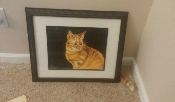 Birbirinden ilginç kedi fotoğrafları 6