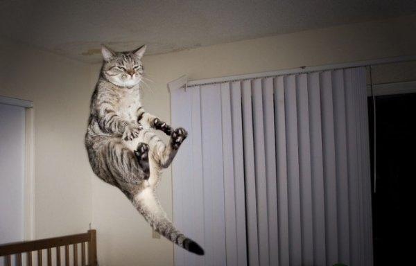 Birbirinden ilginç kedi fotoğrafları 8