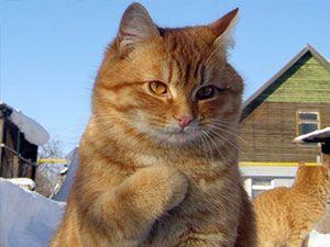 Birbirinden ilginç kedi fotoğrafları
