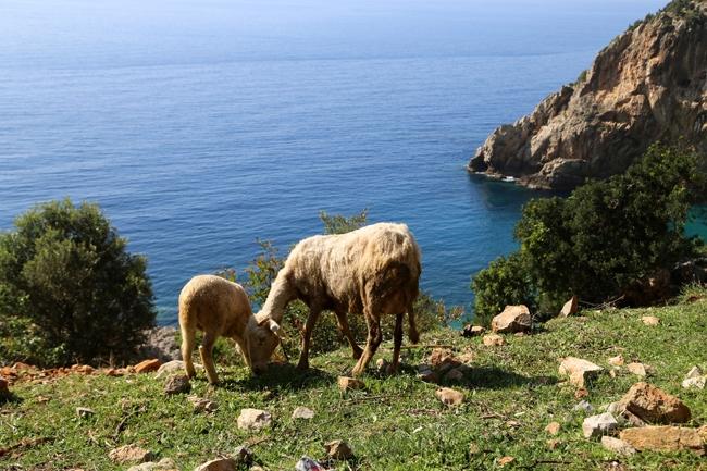 Akdeniz'in saklı cenneti: Karamağara 6