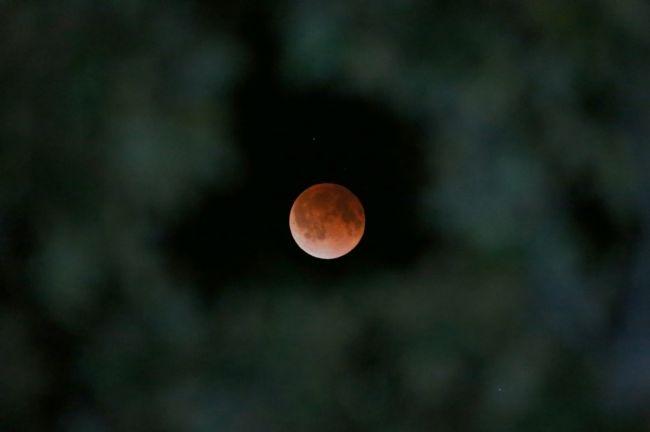 Ay kana bulandı! 42