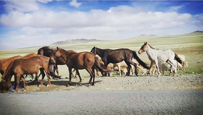 Ermenekli Orta Asya gezgini 17