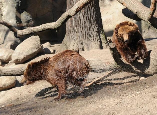Almanya'nın hayvanat bahçesinden harika kareler 1