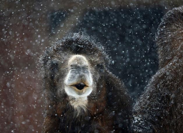 Almanya'nın hayvanat bahçesinden harika kareler 13