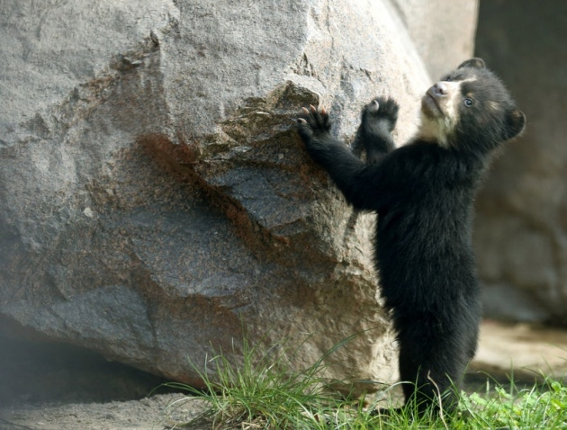 Almanya'nın hayvanat bahçesinden harika kareler 20