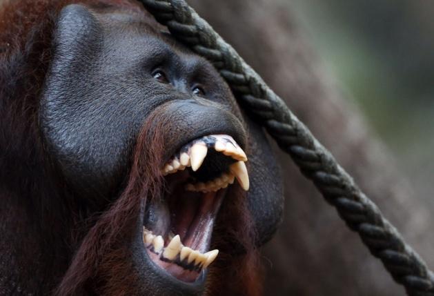 Almanya'nın hayvanat bahçesinden harika kareler 27