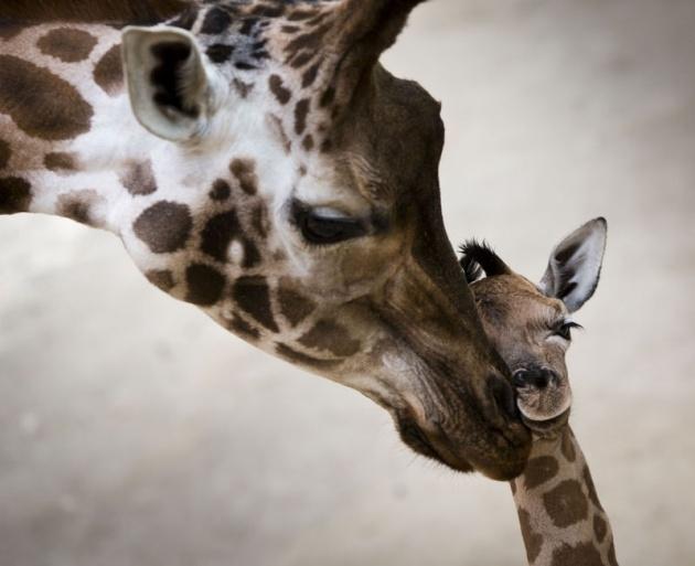 Almanya'nın hayvanat bahçesinden harika kareler 28