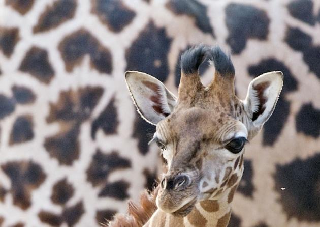 Almanya'nın hayvanat bahçesinden harika kareler 32