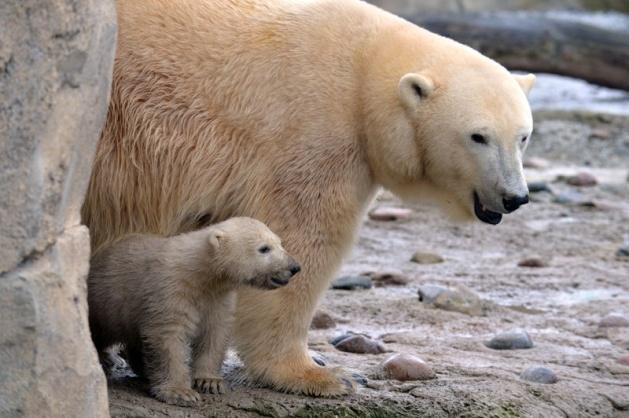 Almanya'nın hayvanat bahçesinden harika kareler 33