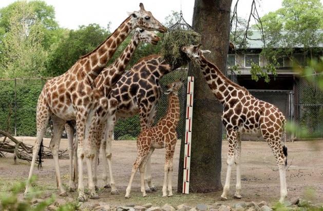 Almanya'nın hayvanat bahçesinden harika kareler 36