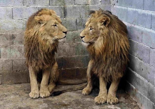 Almanya'nın hayvanat bahçesinden harika kareler 37