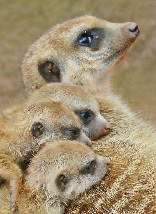 Almanya'nın hayvanat bahçesinden harika kareler 42