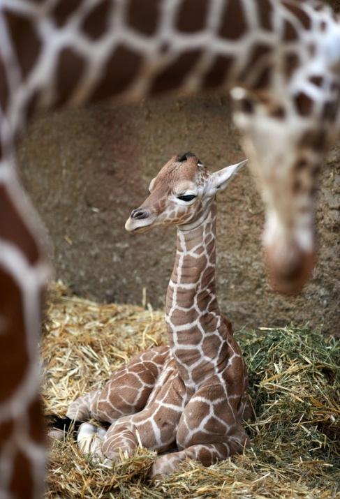 Almanya'nın hayvanat bahçesinden harika kareler 50