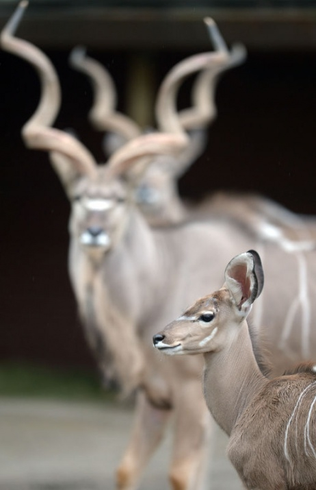 Almanya'nın hayvanat bahçesinden harika kareler 52