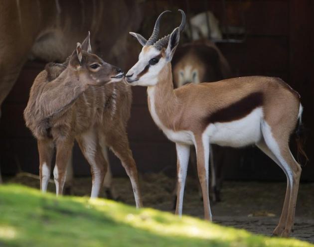 Almanya'nın hayvanat bahçesinden harika kareler 54