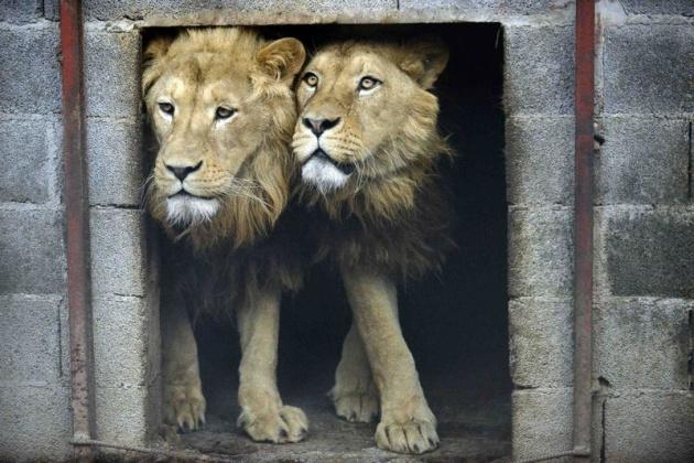 Almanya'nın hayvanat bahçesinden harika kareler 56