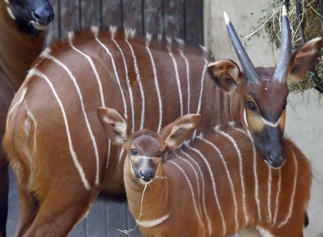 Almanya'nın hayvanat bahçesinden harika kareler 59