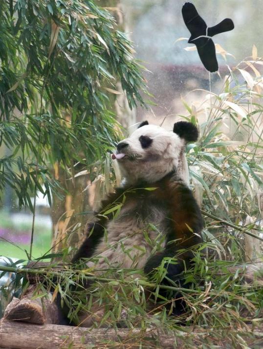 Almanya'nın hayvanat bahçesinden harika kareler 61
