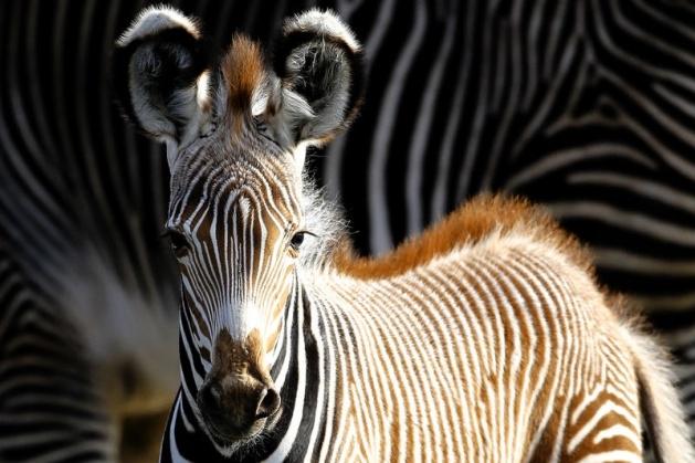Almanya'nın hayvanat bahçesinden harika kareler 65