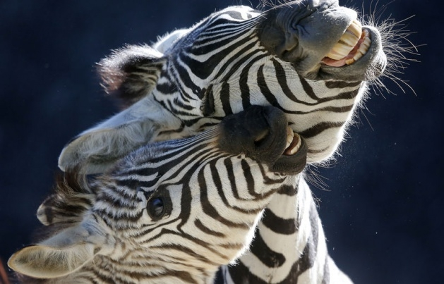 Almanya'nın hayvanat bahçesinden harika kareler 7