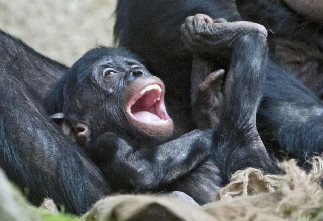 Almanya'nın hayvanat bahçesinden harika kareler 72