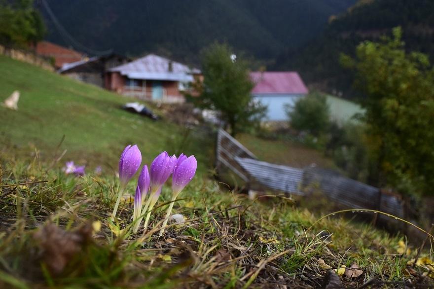 Tarihi İpek Yolu'nda sonbahar bir başka güzel 1