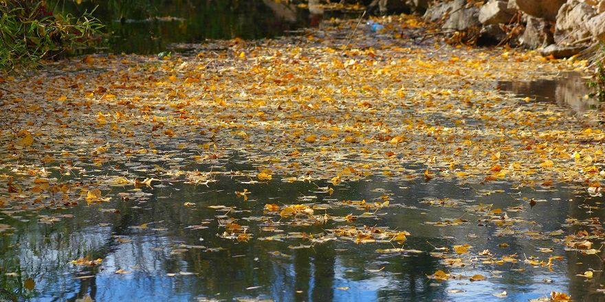 Beyşehir Gölü Milli Parkı'nda sonbahar görüntüleri