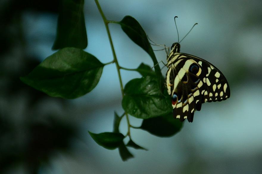 Doğal yaşam alanındaki kelebeklere ziyaretçi akını 1