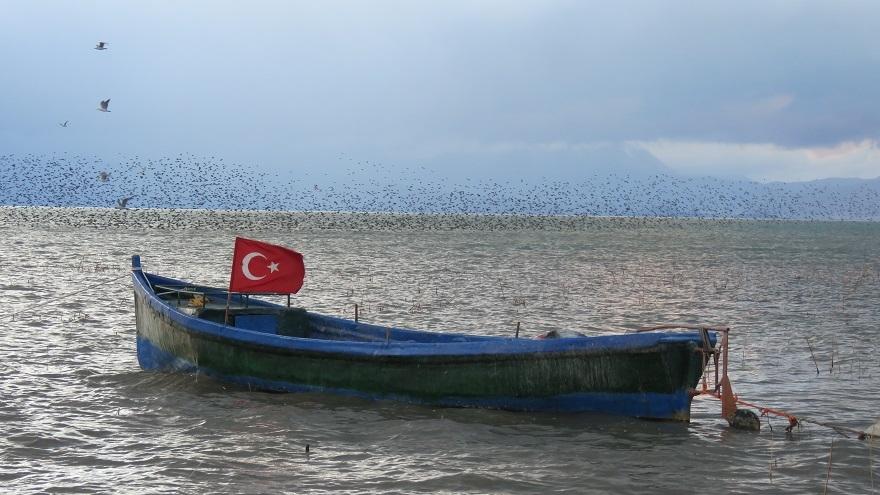 Beyşehir Gölü'nde sığırcıkların görsel şöleni 1