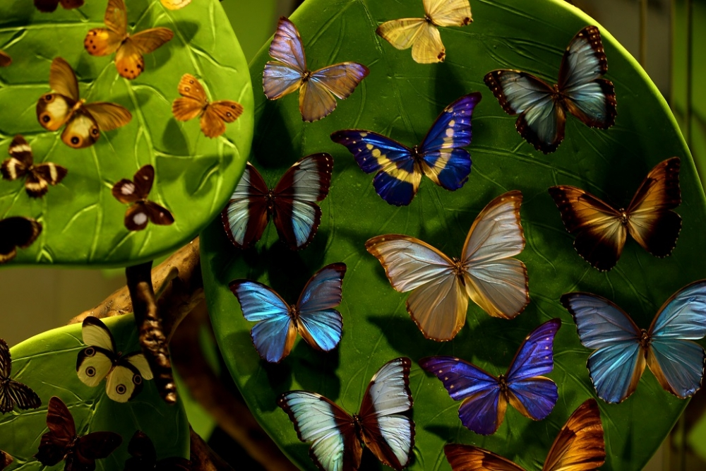 """""""Aşkın Kanatları"""" Tropikal Kelebek Bahçesi 1"""