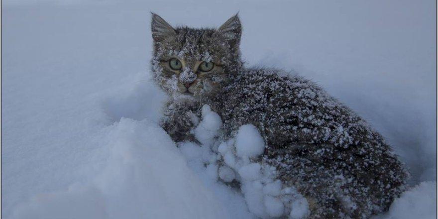 Hadim'den muhteşem kar manzaraları