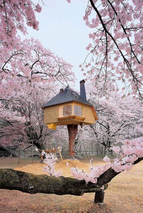 Birbirinden harika ağaç evler 16