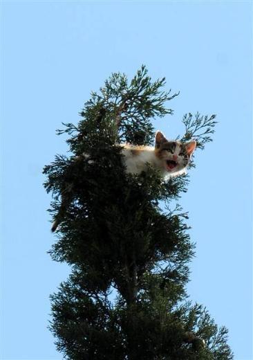 Adana'da kedi kurtarma operasyonu 1