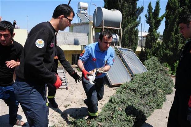 Adana'da kedi kurtarma operasyonu 7