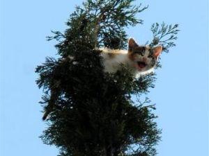 Adana'da kedi kurtarma operasyonu