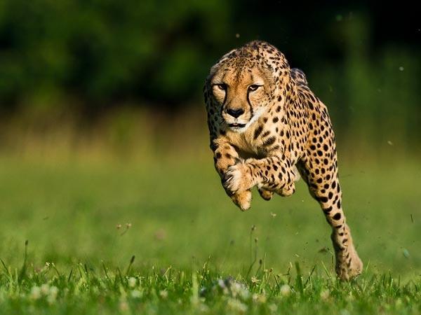 İşte dünyanın en hızlıları! 3
