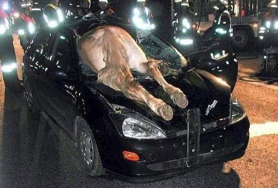 Dünyanın en ilginç trafik kazaları 34