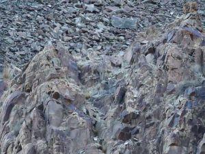 Bakalım siz onları görebilecek misiniz?