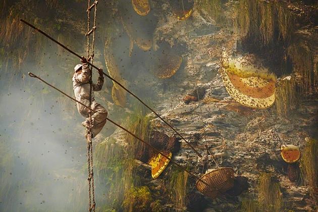 Nepal Yerlilerinin Arılarla Bal Savaşı 1