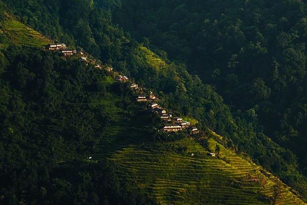 Nepal Yerlilerinin Arılarla Bal Savaşı 5