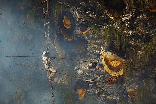 Nepal Yerlilerinin Arılarla Bal Savaşı 8