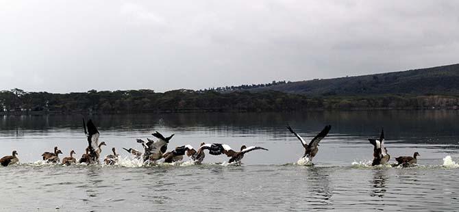 Büyüleyen göl: Lake Naivasha 13