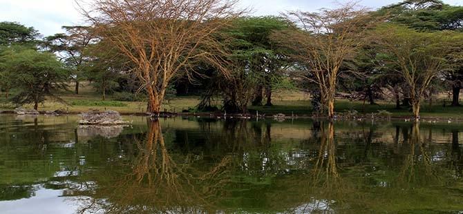 Büyüleyen göl: Lake Naivasha 2